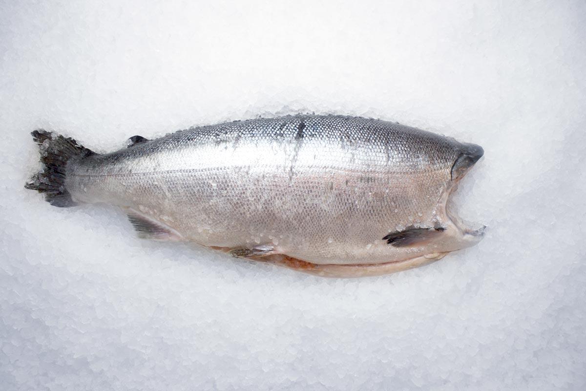Кижуч потрошеный без головы 2,7-4 кг свежемороженый