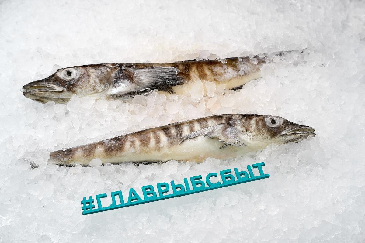 Ледяная рыба тушка неразделанная свежемороженая